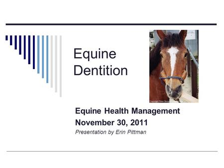 Equine Dentition Equine Health Management November 30, 2011 Presentation by Erin Pittman.