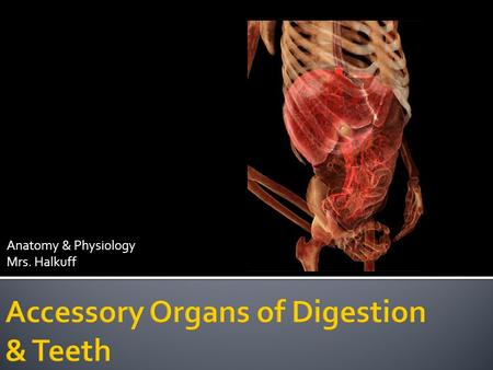 Anatomy & Physiology Mrs. Halkuff. Accessory organs produce secretions that aid the organs of the alimentary canal. Include: Salivary Glands Pancreas.