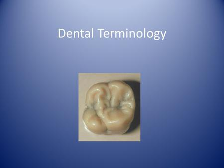 Dental Terminology Typodonts a model of each arch that contains all of the teeth in the jaw. You will work with maxillary (upper) and mandibular (lower)