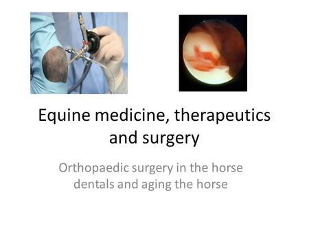 Equine medicine, therapeutics and surgery Orthopaedic surgery in the horse dentals and aging the horse.