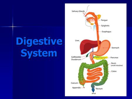 Digestive System http://commons.wikimedia.org/wiki/File:Digestive_system_simplified.svg.