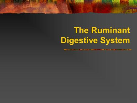 The Ruminant Digestive System. Ruminant Digestive Systems Functions of the digestive system of animals include: ingestion (eating) chewing (mastication)
