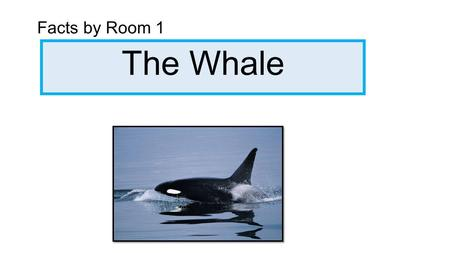 The Whale Facts by Room 1. Whales have humungous blow holes. Some eat sharks. Whales are the biggest animal on earth. Some dont have teeth. Some whales.