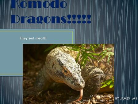 They eat meat!!! BY: JAMES. M !!. The scientific name is Varanus Komodoensis. It is the worlds largest lizard Dragons live up to 50 years There are only.