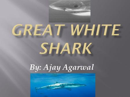 By: Ajay Agarwal Weight: 5000 to 7000 pounds Length: up to 25 feet Colors: gray and white Skin: rough skin/teeth in skin It has very good ears 5 fins.