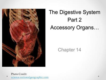 The Digestive System Part 2 Accessory Organs…