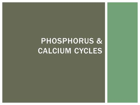 PHOSPHORUS & CALCIUM CYCLES. Phos = important for DNA, ATP, phospholipids, bones & teeth and compounds that function in photosynthesis and respiration.