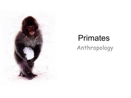 Primates Anthropology.