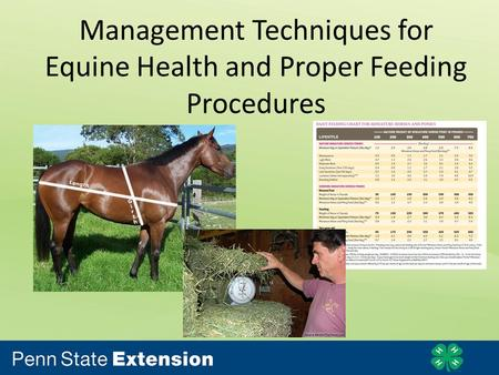 Management Techniques for Equine Health and Proper Feeding Procedures.