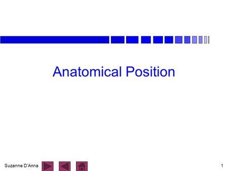 Anatomical Position.