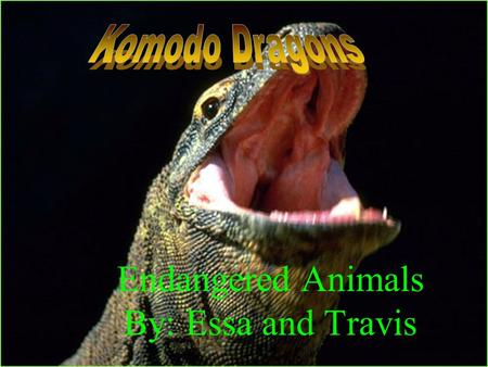 Endangered Animals By: Essa and Travis. Komodo Dragons get to about 10 feet tall Komodo Dragons span goes to about 30 to 45 years old Komodo Dragons.