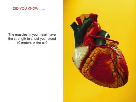 SABIAS QUE… The muscles in your heart have the strength to shoot your blood 10 meters in the air? DID YOU KNOW …..