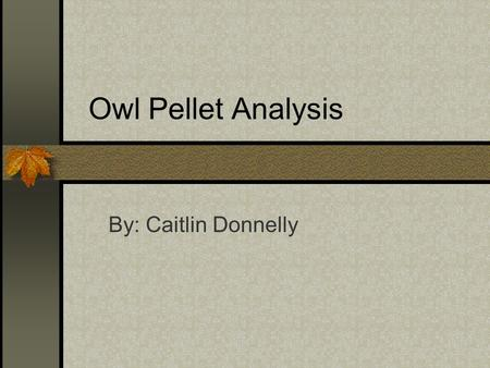 Owl Pellet Analysis By: Caitlin Donnelly. Food Web This is the Food Web of the Northwestern Washington Barn Owl. It shows what owls eat, and what those.