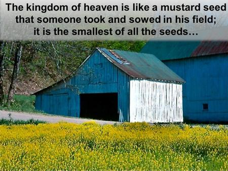 The kingdom of heaven is like a mustard seed that someone took and sowed in his field; it is the smallest of all the seeds… The kingdom of heaven is like.