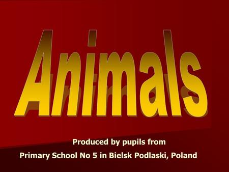 Produced by pupils from Primary School No 5 in Bielsk Podlaski, Poland.