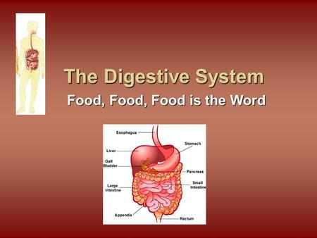 The Digestive System Food, Food, Food is the Word.
