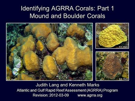 Identifying AGRRA Corals: Part 1 Mound and Boulder Corals