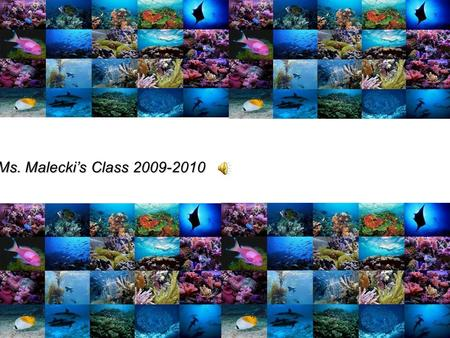 OCEANLIFE A Powerpoint Presentation by Ms. Maleckis Class 2009-2010.