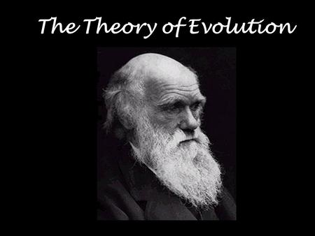 The Theory of Evolution. Evolutionary biology addresses fundamental questions Why are there so many different kinds of organisms? Why are organisms so.