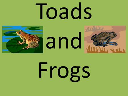 Toads and Frogs.