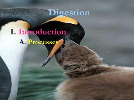 Digestion I. Introduction A. Processes.