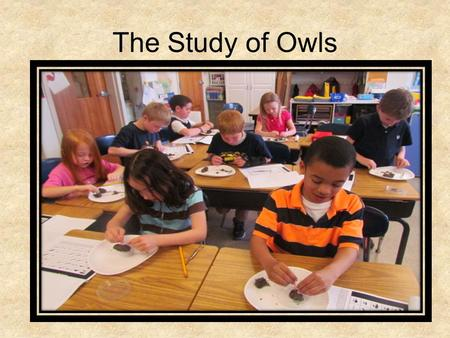 The Study of Owls.