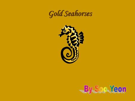 Gold Seahorses By Soo Yeon.