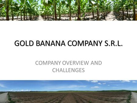 GOLD BANANA COMPANY S.R.L. COMPANY OVERVIEW AND CHALLENGES 1.