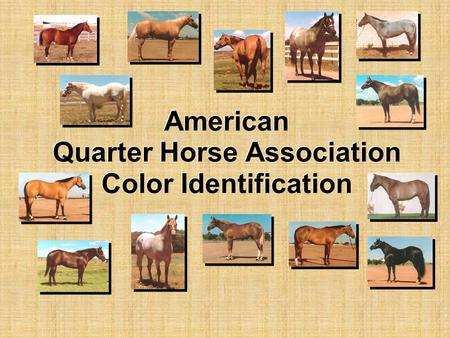 American Quarter Horse Association Color Identification.