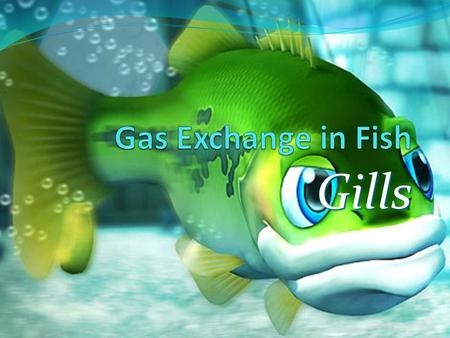 Gas Exchange in Fish Gills.