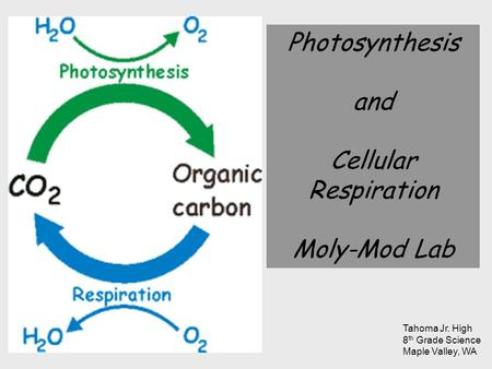 Photosynthesis and Cellular Respiration Moly-Mod Lab Tahoma Jr. High
