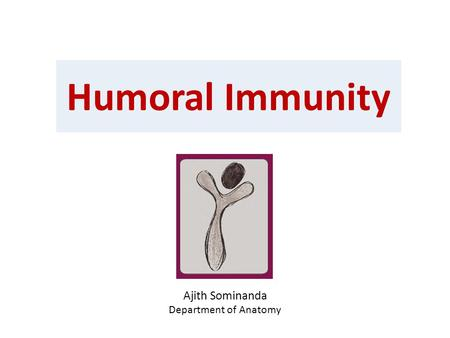 Humoral Immunity Ajith Sominanda Department of Anatomy.