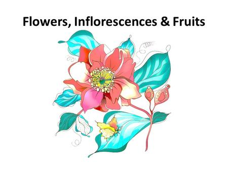 Flowers, Inflorescences & Fruits. Floral characteristics are the most commonly features to identify plants Much more reliable than vegetative characteristics.
