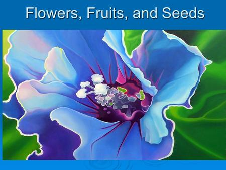 Flowers, Fruits, and Seeds. Most herbs: Dicotyledons! Dicotyledons!