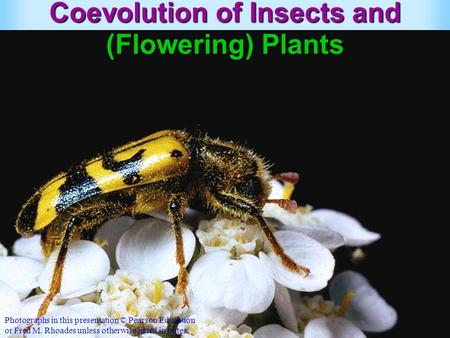 Coevolution of Insects and (Flowering) Plants Photographs in this presentation © Pearson Education or Fred M. Rhoades unless otherwise listed in notes.