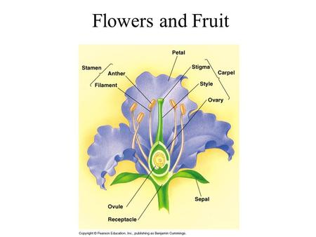 Flowers and Fruit. Flower Structure Generalized flowers - 2 outer sets of sterile parts, 2 inner sets of fertile parts Outer sterile part - sepals, collectively.