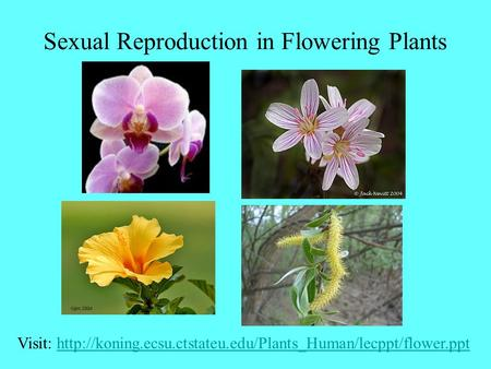 Sexual Reproduction in Flowering Plants Visit: