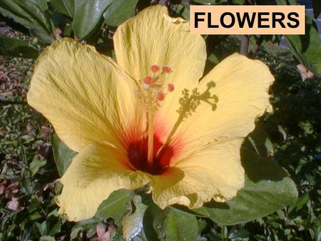 FLOWERS. Parts of a Flower Flowers make pollen, attract pollinators, produce fruit, and make seeds. Despite differences in appearance, most flowers have.