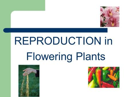 REPRODUCTION in Flowering Plants. I. FLOWERS Are the organs of reproduction in anthrophytes (flowering plants)