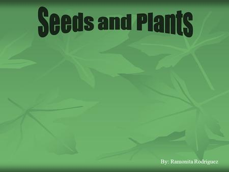 Seeds and Plants By: Ramonita Rodriguez.