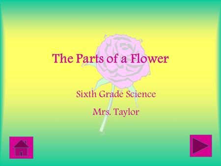 The Parts of a Flower Sixth Grade Science Mrs. Taylor.