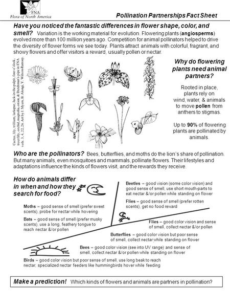Pollination Partnerships Fact Sheet Who are the pollinators? Bees, butterflies, and moths do the lions share of pollination. But many animals, even mosquitoes.