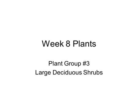 Week 8 Plants Plant Group #3 Large Deciduous Shrubs.