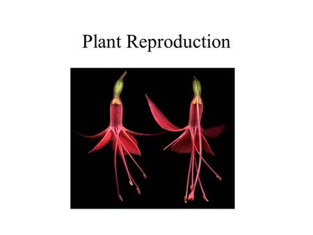 Plant Reproduction.