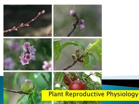 Plant Reproductive Physiology