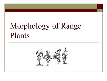 Morphology of Range Plants. Objectives Define plant morphology Describe characteristics of the leaves, stems, roots, and flowers of range plants Describe.