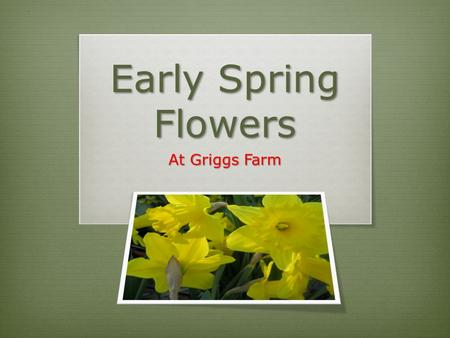 Early Spring Flowers At Griggs Farm. Early Spring at Griggs Farm Is there anything you can safely plant in early April? YES!!