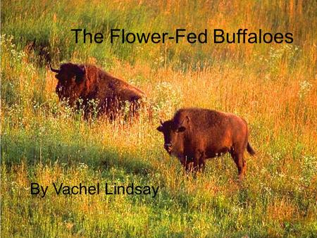 The Flower-Fed Buffaloes By Vachel Lindsay. Background An American poet. He was born on the 10 th November 1879 in Illinois, USA. He is considered the.