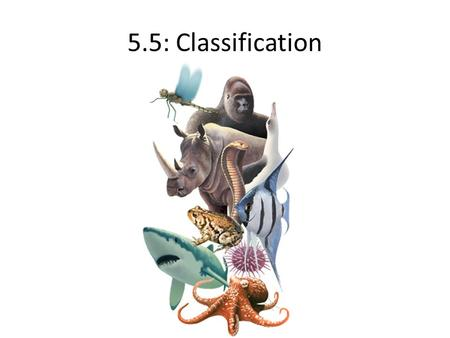 5.5: Classification. 5.5.1: Binomial system of nomenclature The scientific name of a species consists of two words; both words are italicized but only.