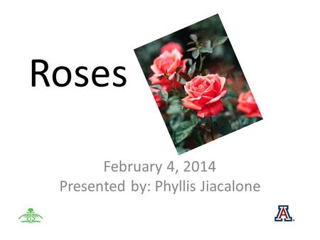 Roses February 4, 2014 Presented by: Phyllis Jiacalone.